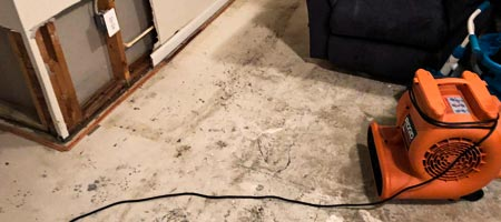 Mold Testing & Inspection in Centreville VA
